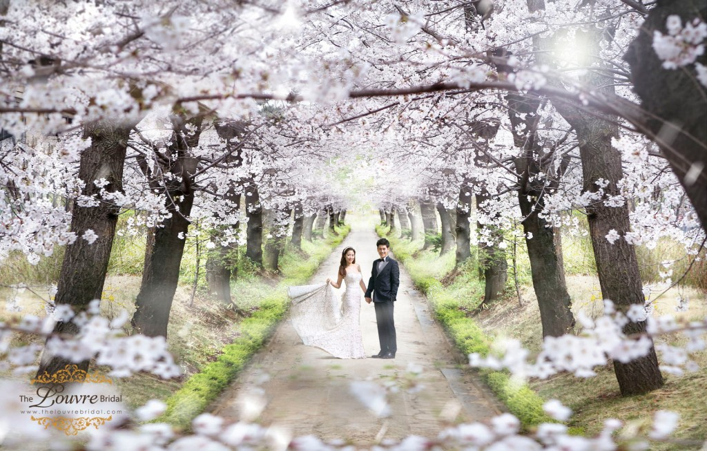 Korea-Prewedding-Photography-Spring-4
