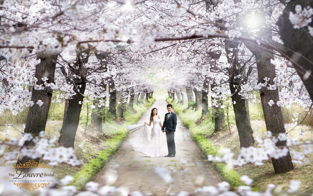 Best Season To Visit Korea For Your Prewedding Photoshoot