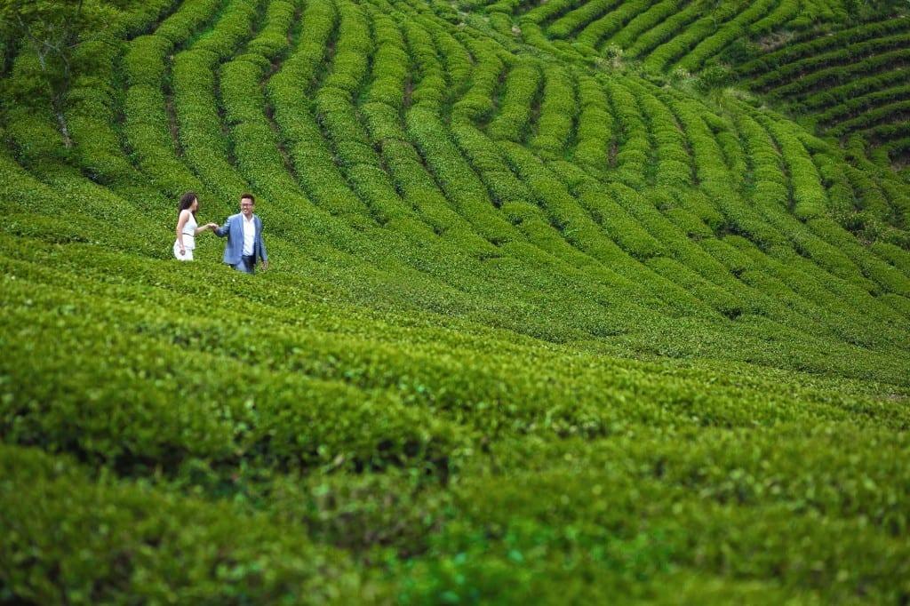 Overseas-Pre-Wedding-Photos-Vietnam
