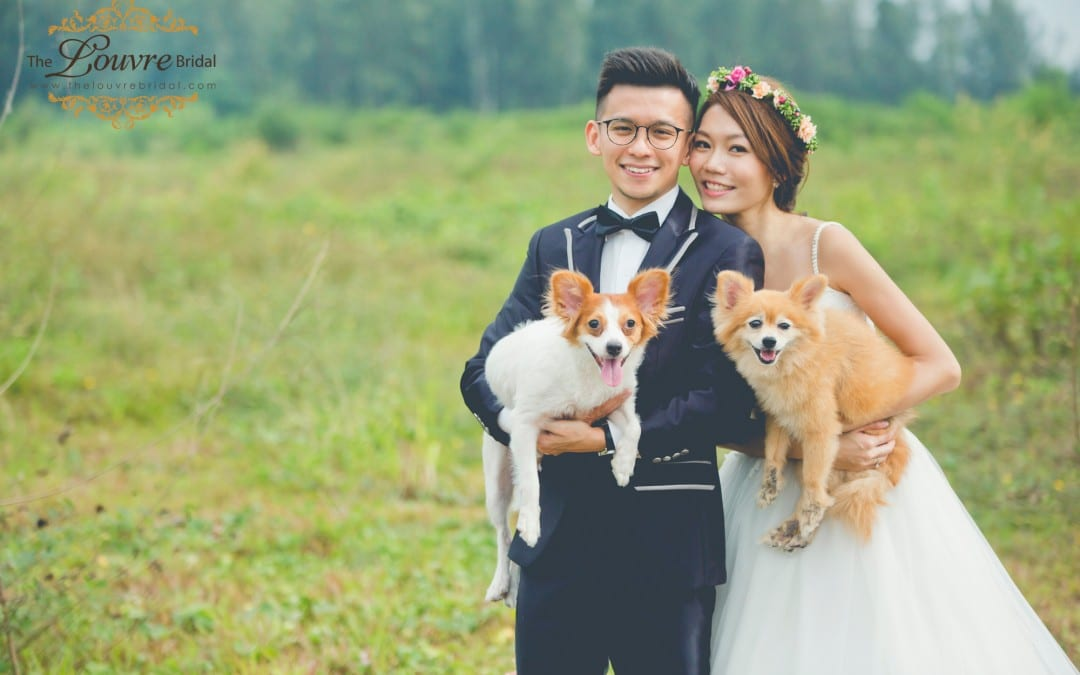Wedding Photos With Your Lovely Furry Pets